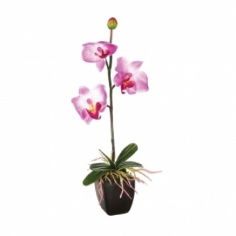 ORCHIDEE POT PM H26CM