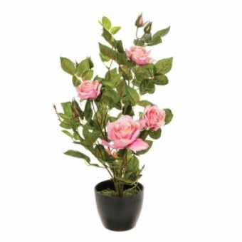 ROSIER POT 4 ROSE+6 BOUTON H50