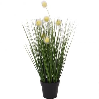 HERBE DECO EN POT